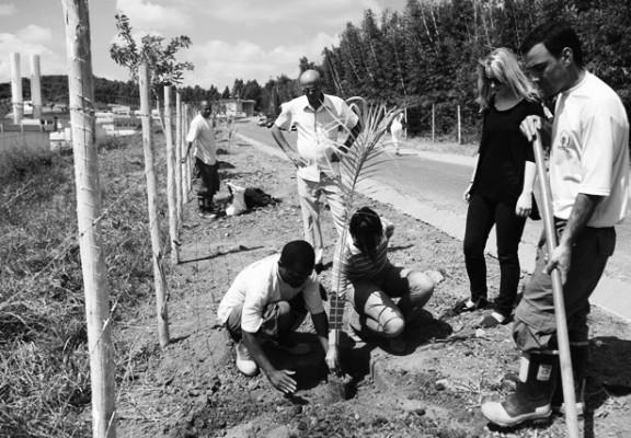 Minas Gerais Prisoners Planting Project